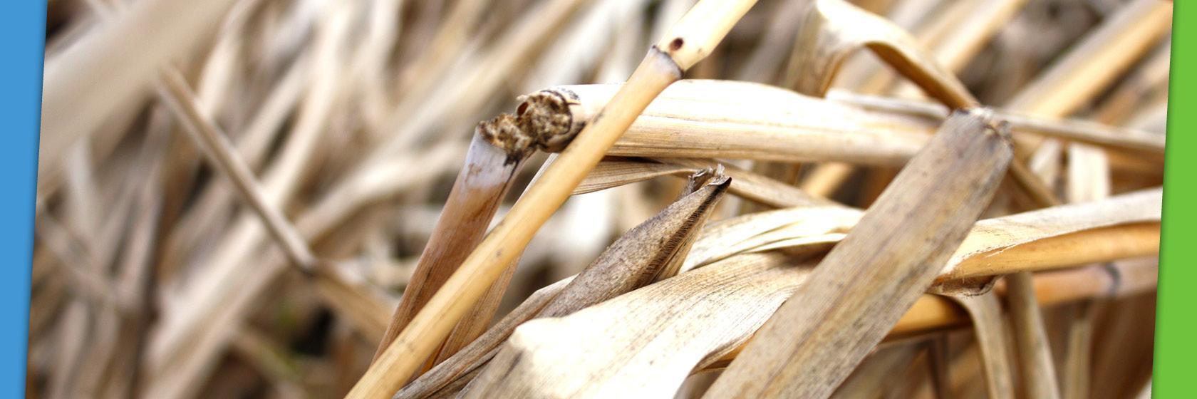 Copyright Andreas Pilz, Deutsches Biomasseforschungszentrum Gemeinnuetzige GMBH (DBFZ)